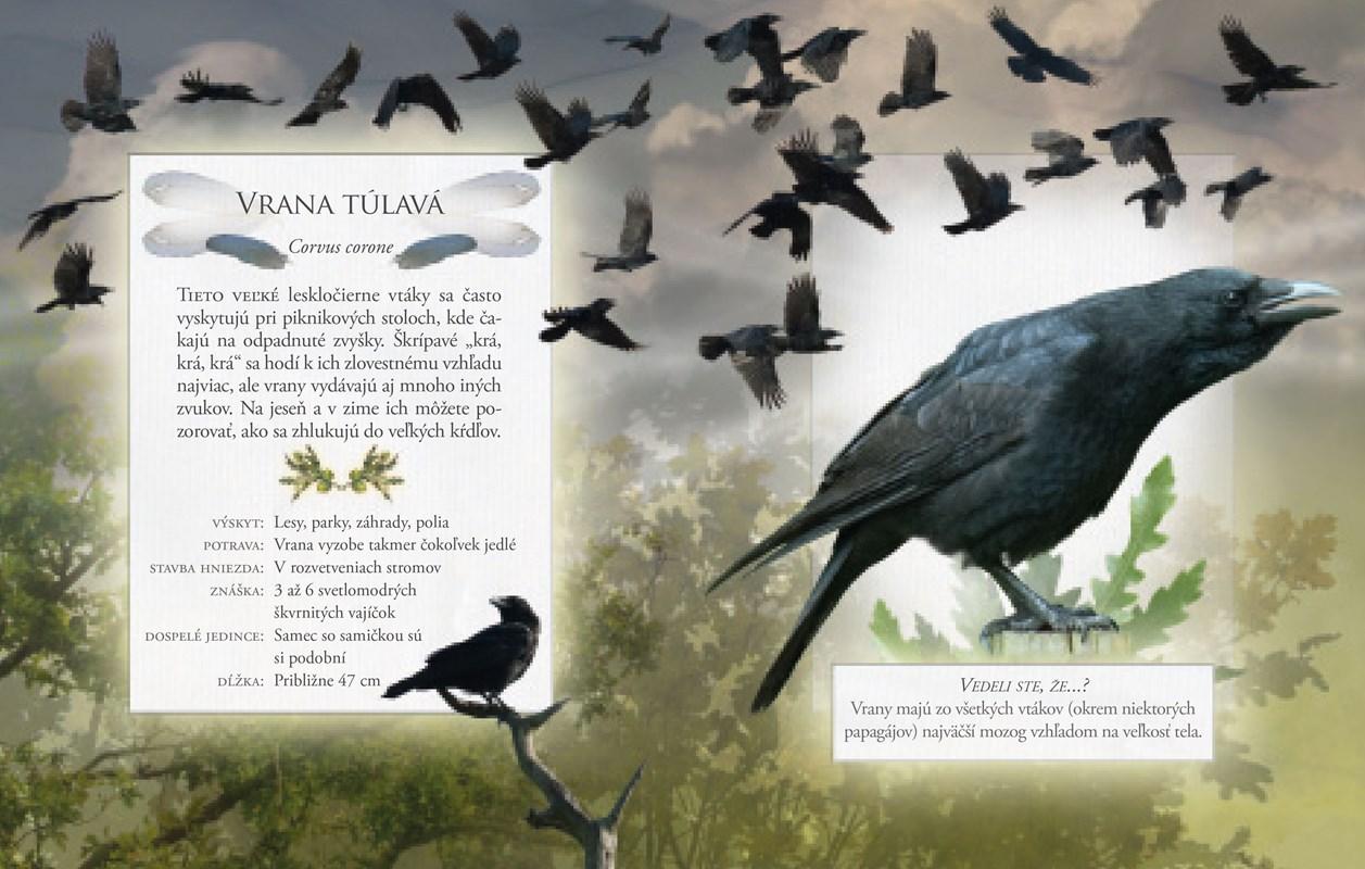 Stiahnuť veľké vtáky